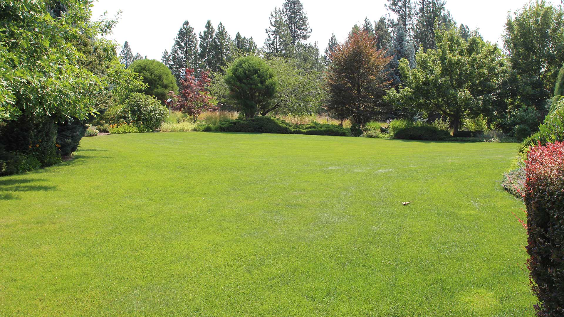 Healthy, green lawn and landscaping in Veradale, WA.