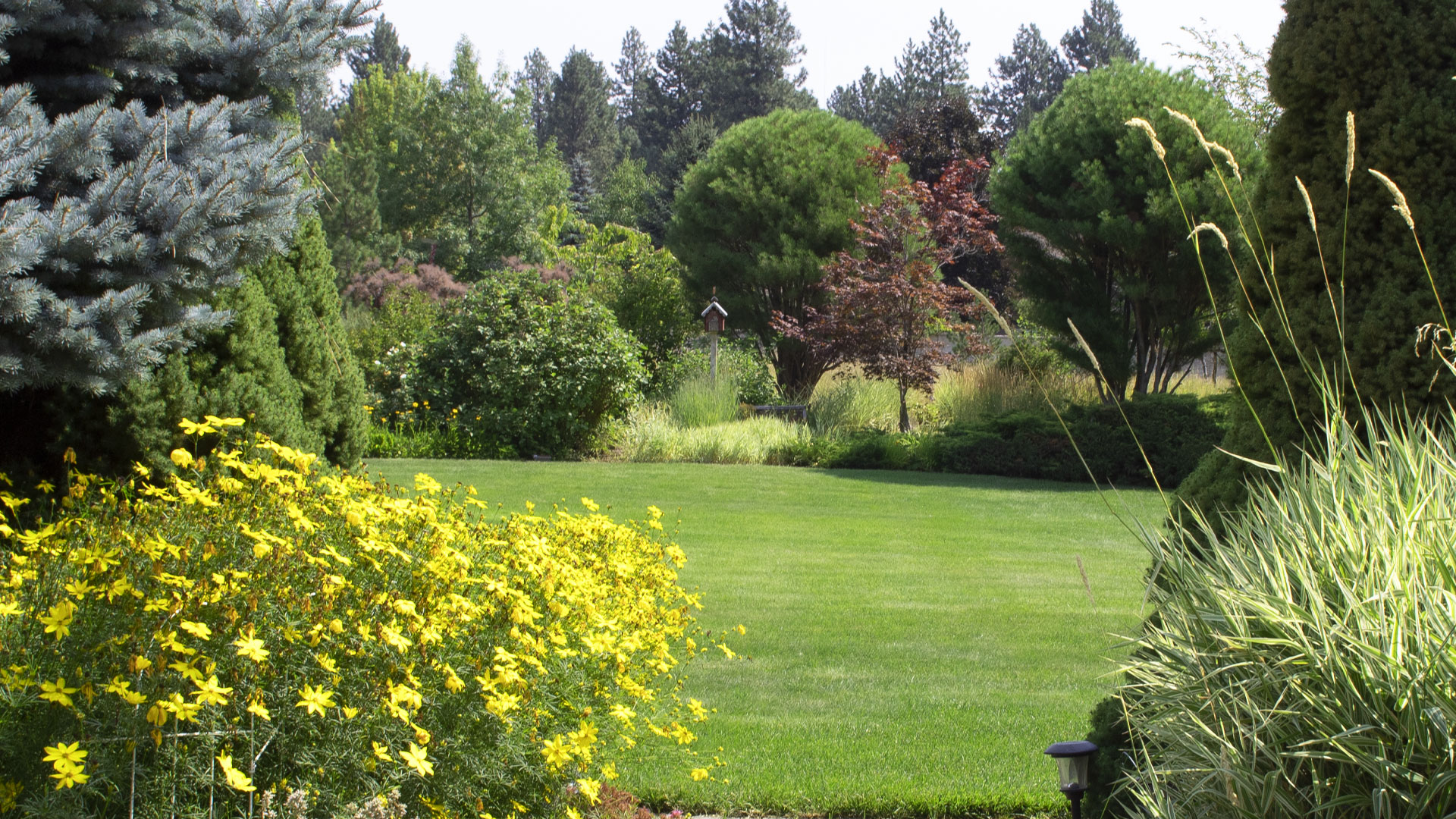 Our lawn care and disease control treatments help this lawn in Liberty Lake, WA stay healthy and green.