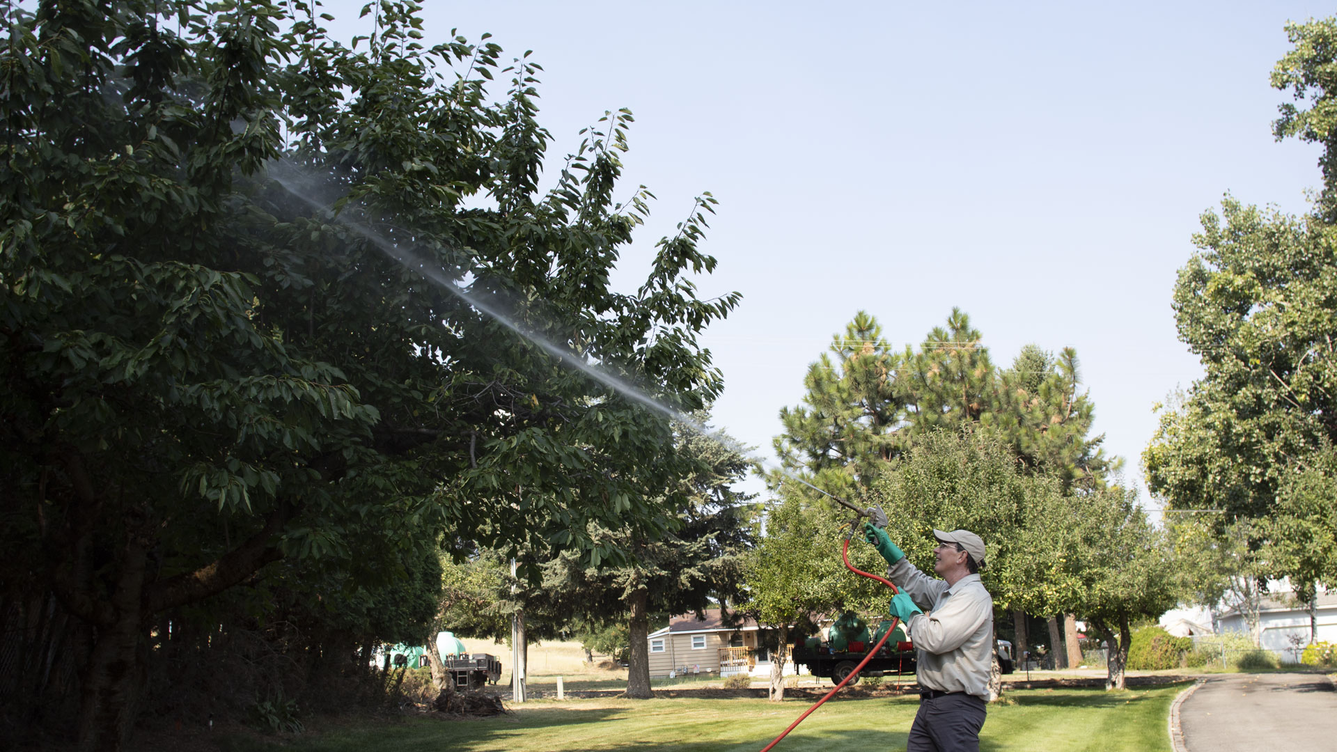 Spraying a large tree with fertilizer at a home in Spokane, WA.