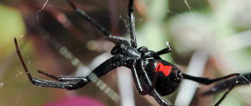 Why Spiders Need to Be Kept Away from Your Family & Pets