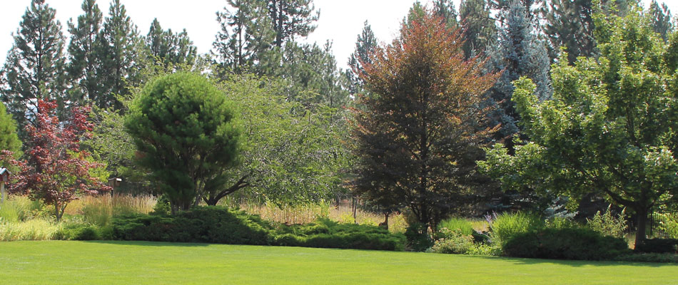 Spokane Valley landscape shrubs and small trees that are free of disease, thanks to our shrub and tree health services.